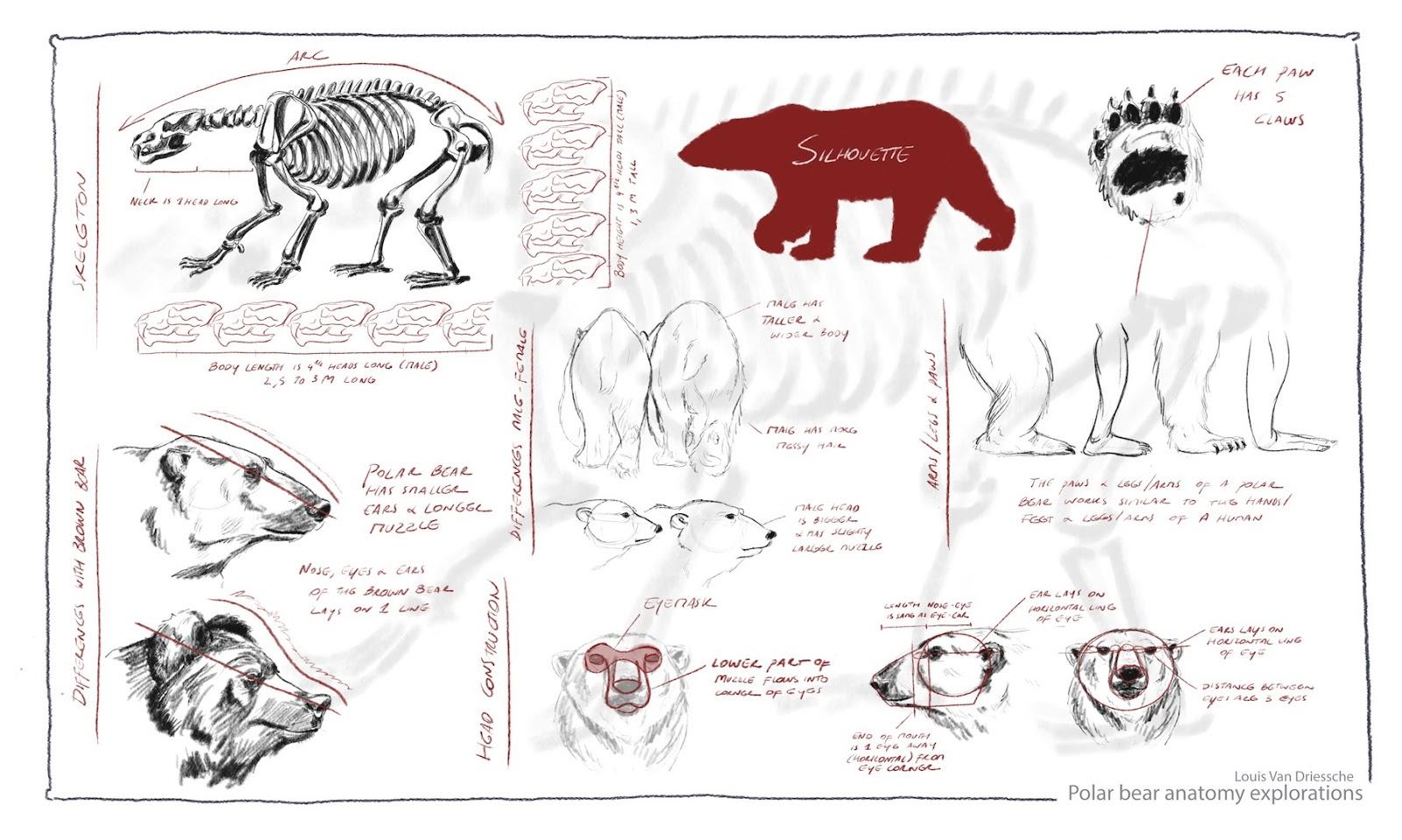 Bear Skull Diagram Volvo Wiring Diagrams 740 Polar Internal Anatomy