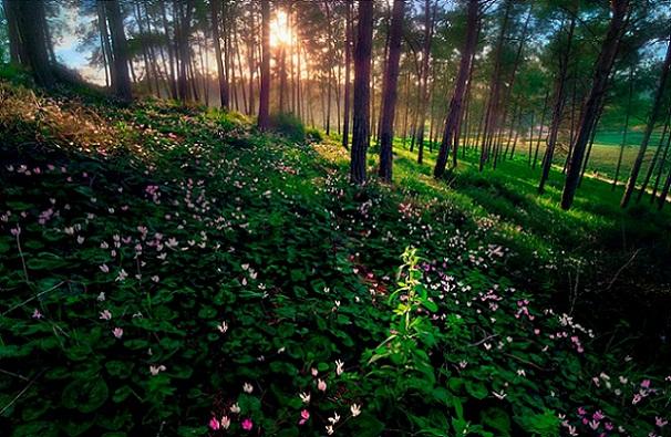 hutan+buatan+israel.jpg (606×395)