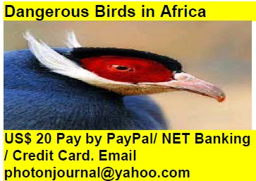 Dangerous Birds in Africa bird story book