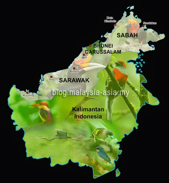 Map of Borneo Bird Race