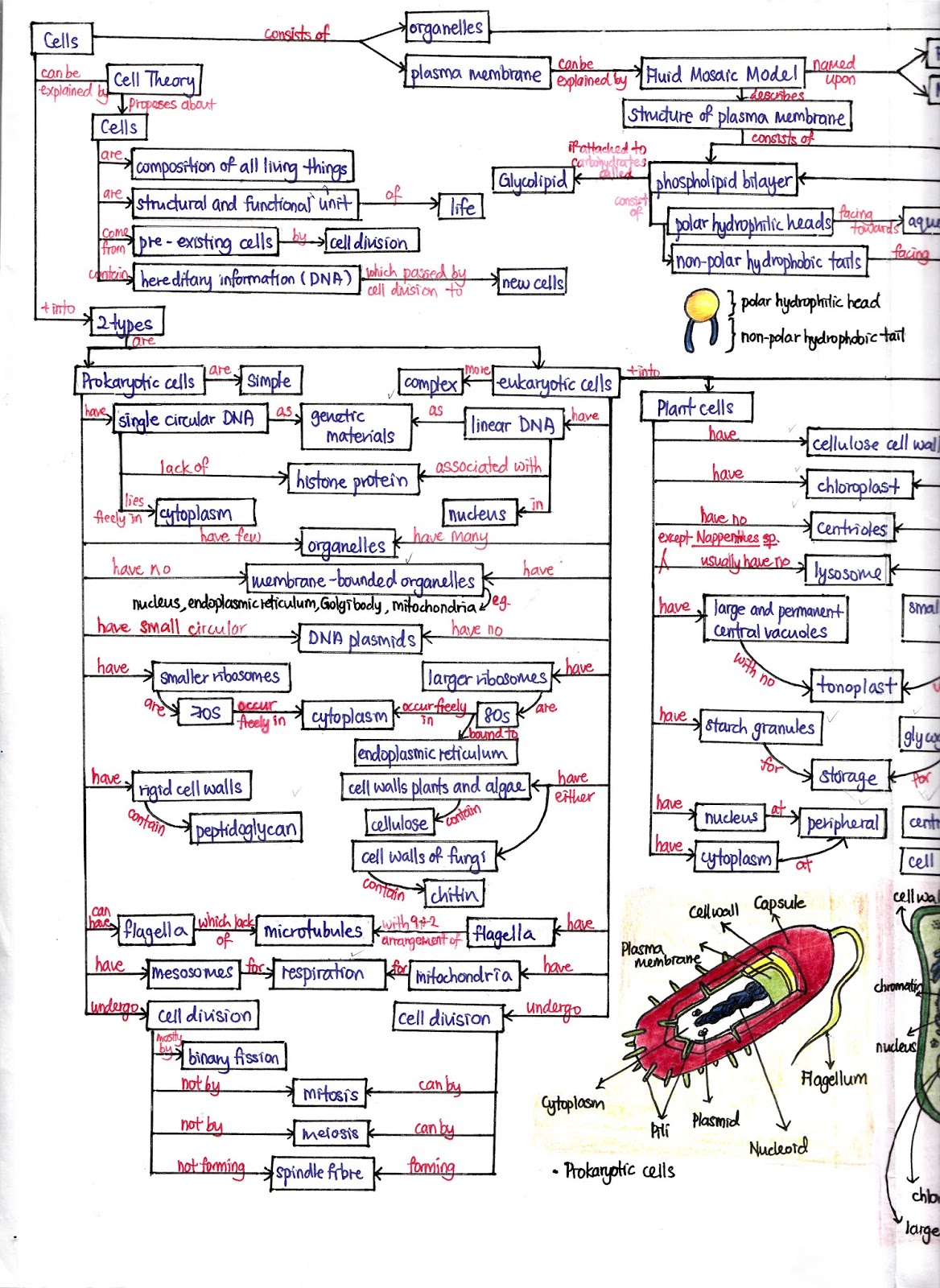 Biology Is To Serve Mankind Concept Map Cell