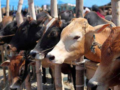 Dharavi, Beef, Mumbai, Crime Branch Mumbai, Beef Seized, Beef Ban