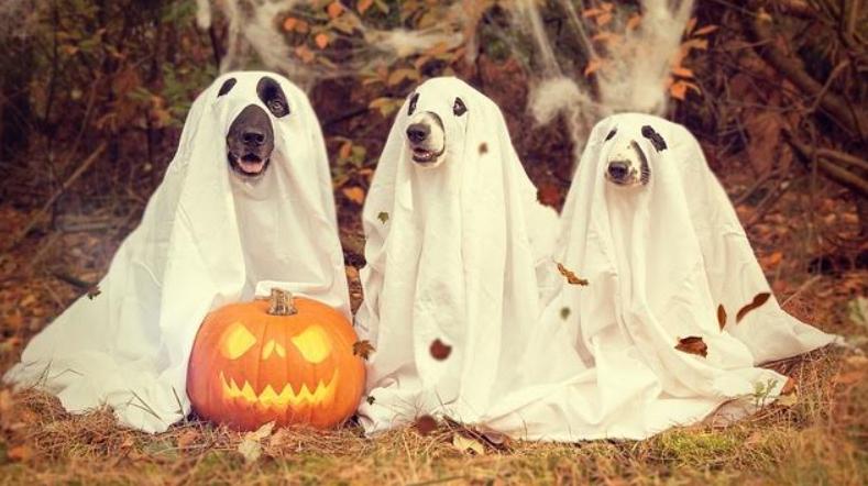 Decorazioni di Halloween  i trend del 2018  d523a3647ad9