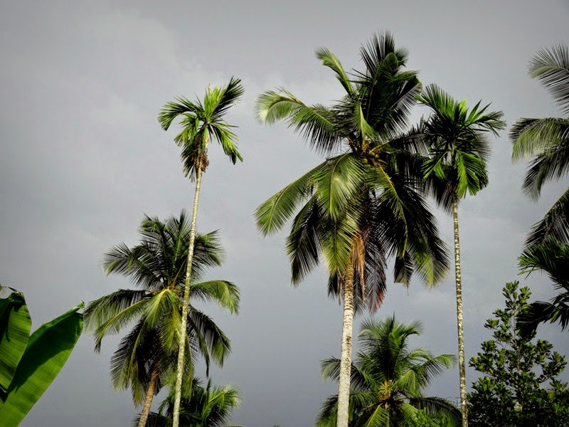 A clouded sky in Kerala countryside