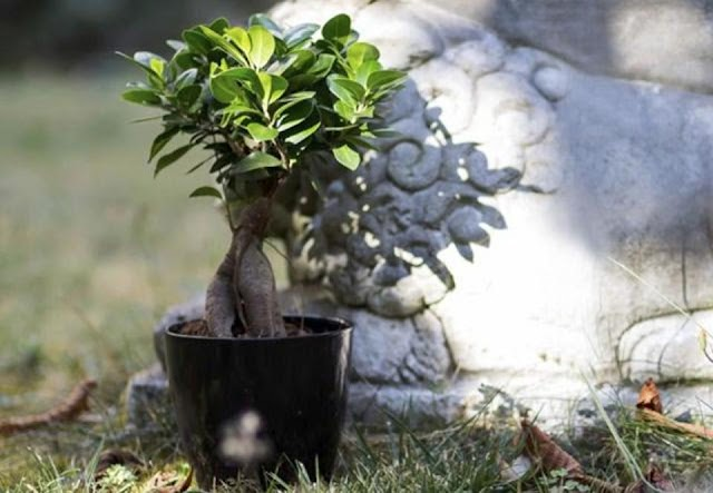 A breath of fresh air: These plants purify the air inside your house