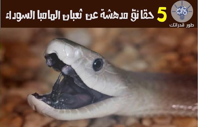 5 حقائق مدهشة عن ثعبان المامبا السوداء