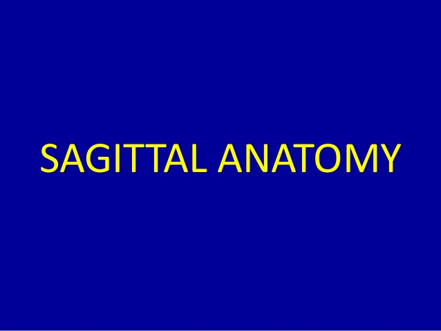 Mri Musculo Skeletal Section Mri Anatomy Of The Shoulder Sagittal