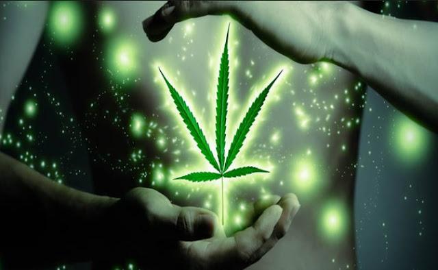 mariguana, medicamento, doctores,