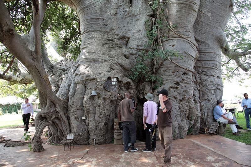 Sunland Baobab, Limpopo Province — This is the entrance to a bar found inside the hollow trunk of the tree.