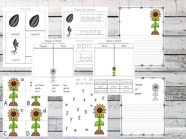 Sunflower Life Cycle printable pack