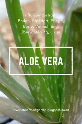 Aloe-Vera-Pin-Steiermarkgarten