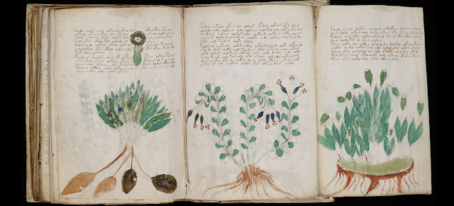 Misteri The Voynich Manuscript