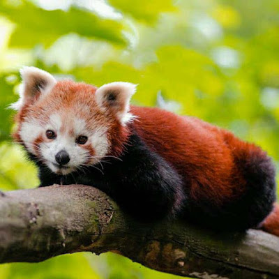 varu-sitting-on-the-tree-imgss-hdphotos