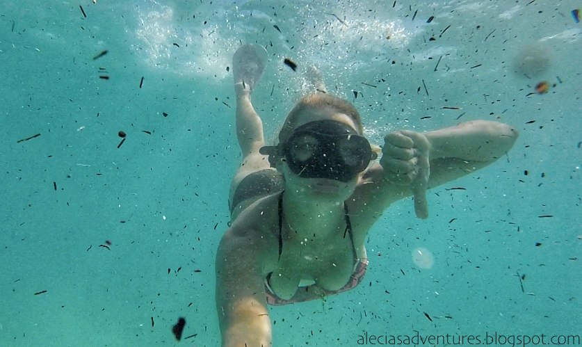 How to Snorkel Like a Pro - Alecia's Adventures