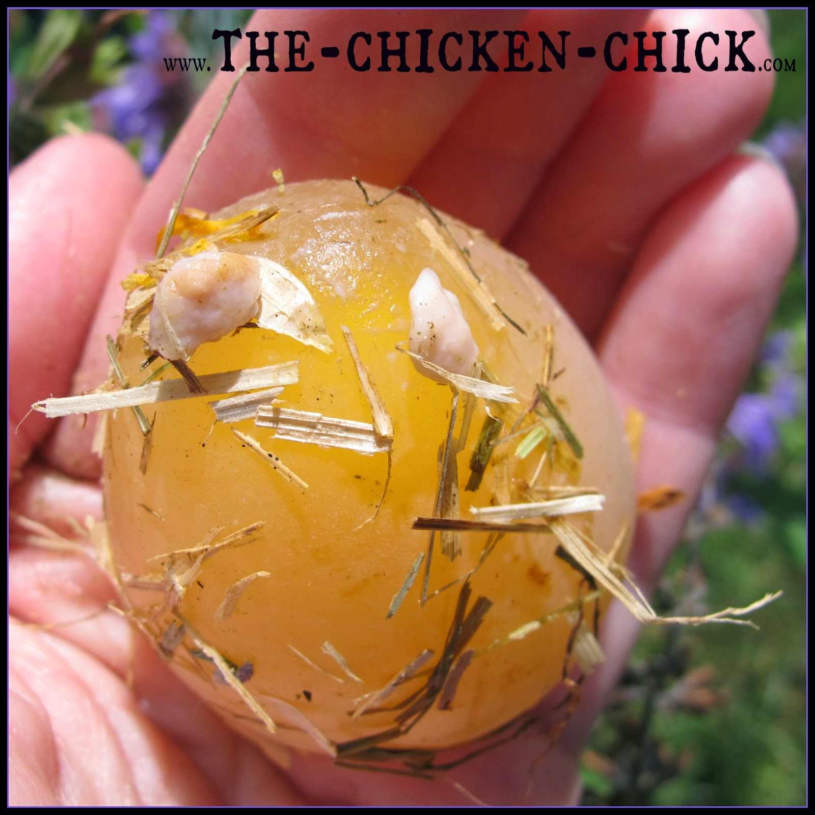 By the time a lash egg is found, the problem has been raging inside the hen for months and the prognosis for recovery is poor. Most hens will not survive more than 6 months with Salpingitis. According to Dr. McKillop If a hen does survive, she is unlikely to return to normal egg laying.