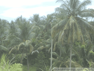 Pertanian kebun di kecamatan Ngadirojo Pacitan