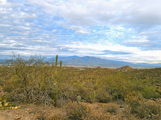 bright colors after monsoon in saguaro national park tucson arizona