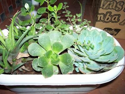 Variedades de plantas con poca necesidad de agua.