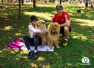 Adestramento de cães - São Paulo