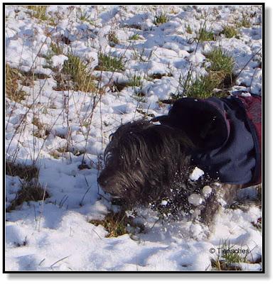 Hunde haben Spaß im Schnee