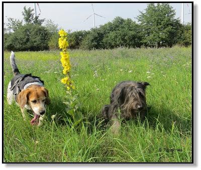 Hundeblog, Dogblog, unterwegs mit Hund, zwei Hunde