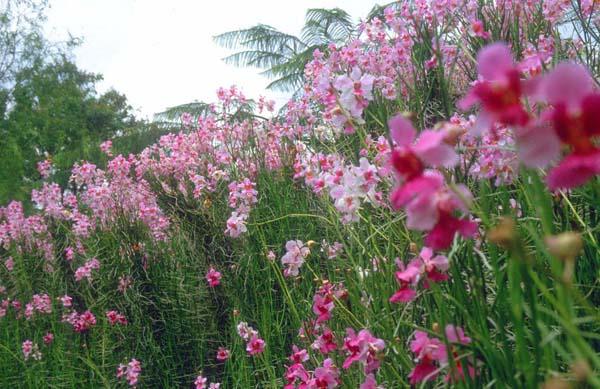 Taman Anggrek Sri Soedewi - Janoopedia