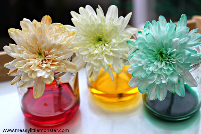 color changing flowers science experiment for preschoolers
