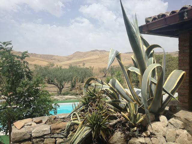 kamienny murek w ogrodzie, agawa