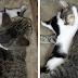 """Gatinha sente saudades de ser mãe e """"adota"""" filhote da vizinhança"""