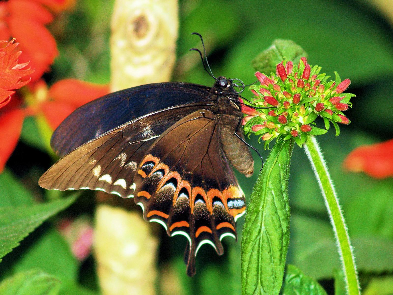 Butterfly Wallpapers Top Best Hd Wallpapers For Desktop