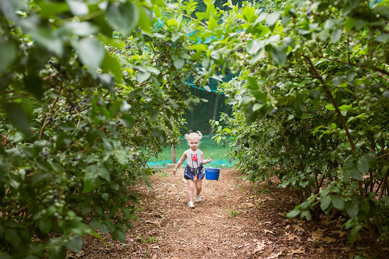Blueberry Picking Rhode Island