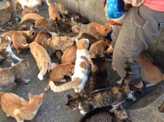 Penduduk Aoshima Tanam 'Catnip' Untuk Halau Nyamuk, Tapi Ini Pula Yang Terjadi Keesokan Harinya.