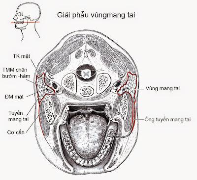 Khoang vùng mang tai