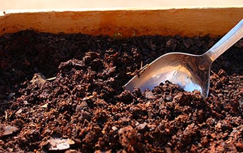 Bước 2 Cách trồng cây oải hương