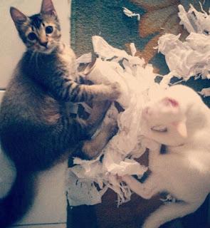 Cara Membuat Kucing Senang dan Bahagia