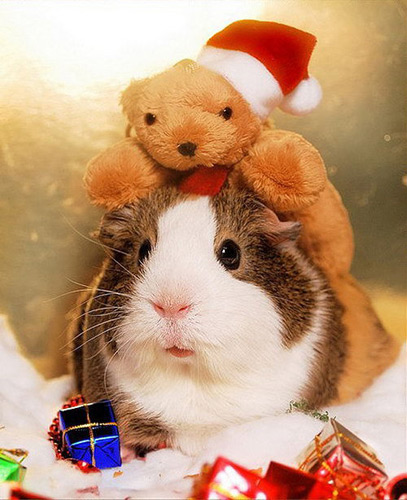 hamster navidad