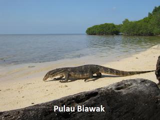 Berpetualang di Pulau Biawak