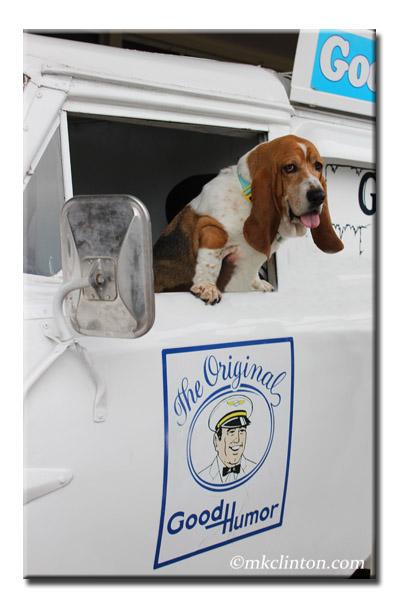 Basset Hound in Good Humor truck
