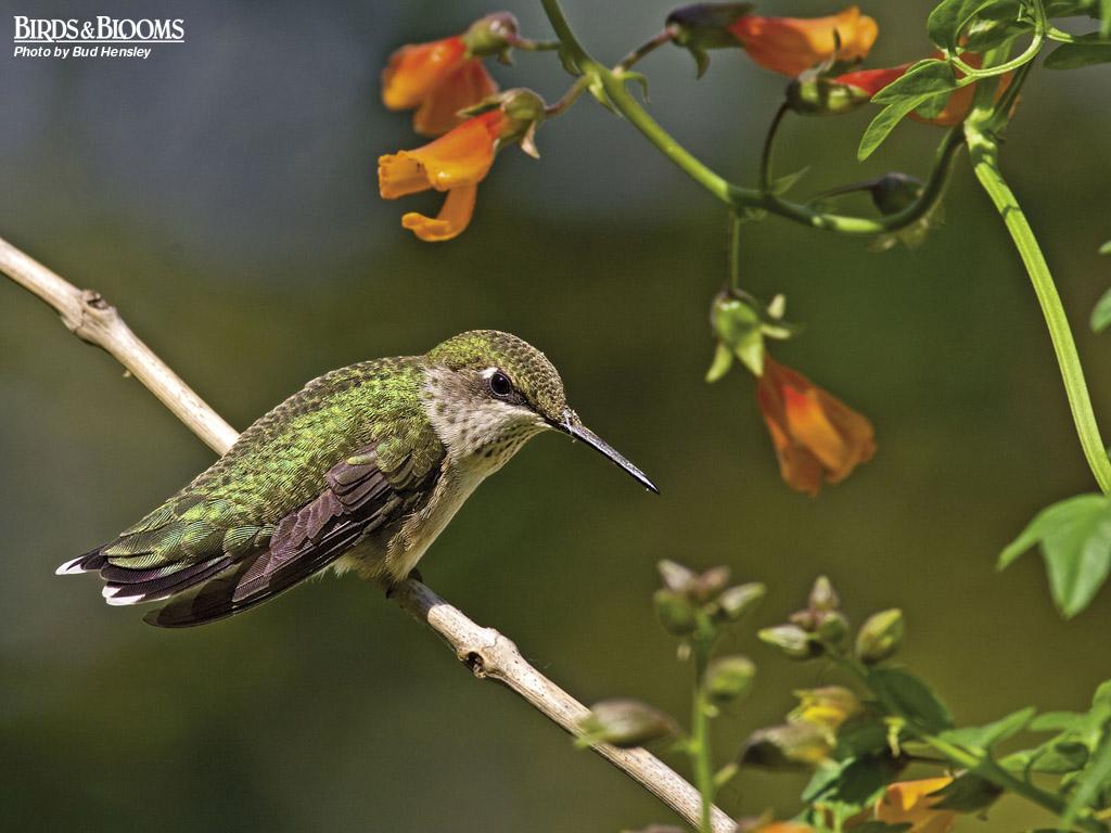 Birds And Blooms Wallpaper