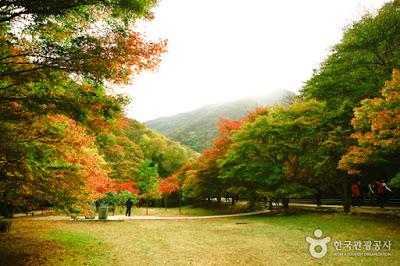 http://english.visitkorea.or.kr/enu/ATR/SI_EN_3_1_1_1.jsp?cid=264295