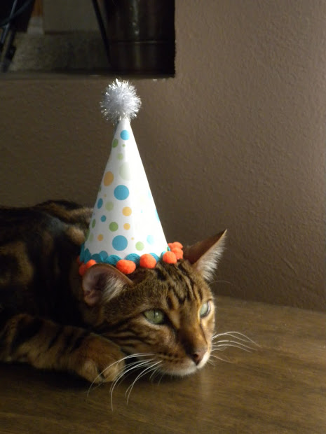 Happy Birthday Cat Party Hat