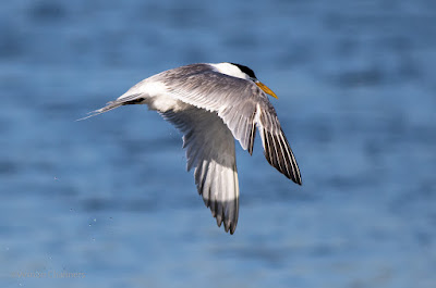 Birds in Flight Photography Cape Town: Using Wide Zone Autofocus