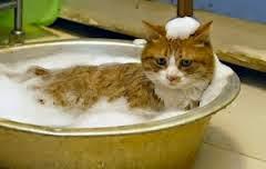 Cara Memandikan Kucing Cara Memandikan Kucing Yang Takut Air Dengan Benar