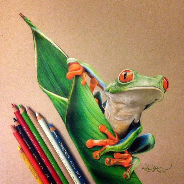 08-Frog-Robin-Gan-Realistic-Color-Pencil-Animal-Drawings-www-designstack-co