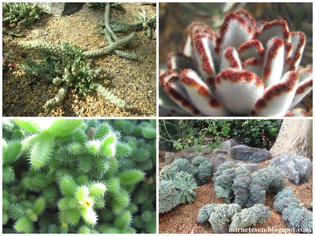 Цветочный Купол, Сингапур - сад суккулентов и кактусов