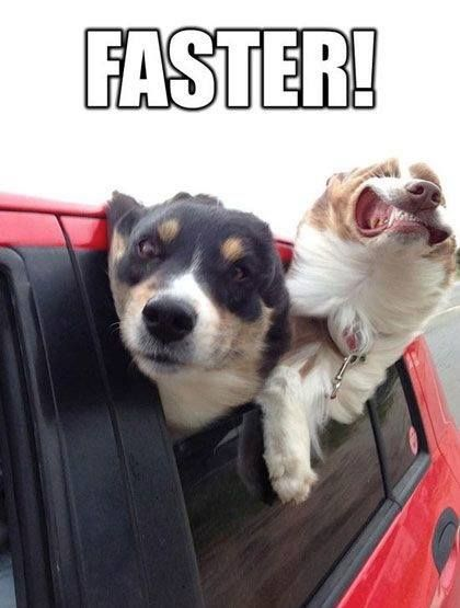 funniest dogs memes