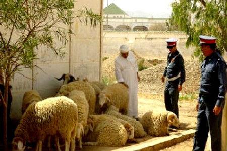 """اعتقال رأس عصابة """"فراقشية"""" روعت فلاحي سوس و مراكش !"""