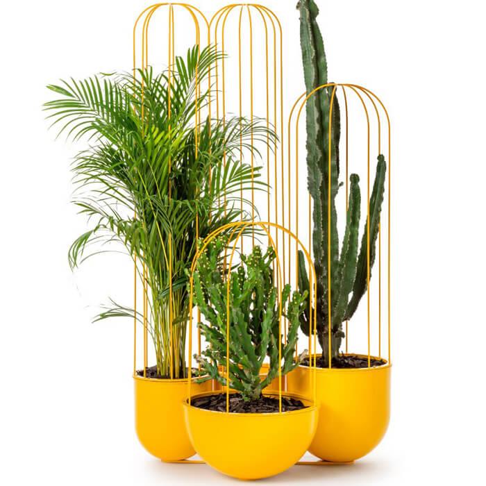 Decorare casa con piante di cactus