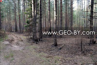 Ласток. Погорелый лес