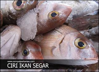 Mengenali ciri-ciri Ikan yang masih segar